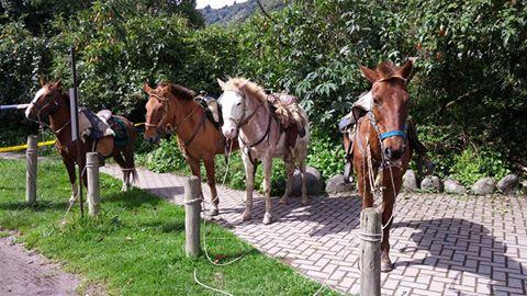 Ecuador horseback ride