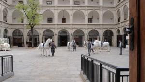 LThe world famous Lipizzaner Stallions